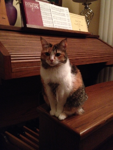 Cat Kilala on organ bench