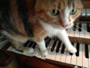 My cat Kilala decided to walk across the keyboard while I was practicing!