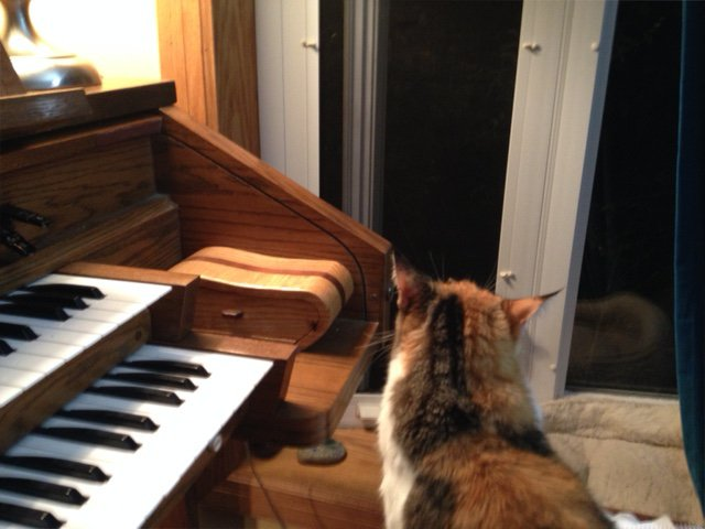 "Kilala came to the organ bench while I was attempting to play ""All Creatures of Our God and King"" to the tune of LASST UNS ERFREUEN"