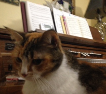 Kilala cat on the organ bench